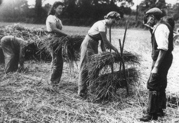 Home Sweet Home Front - 'Hay Making' Image